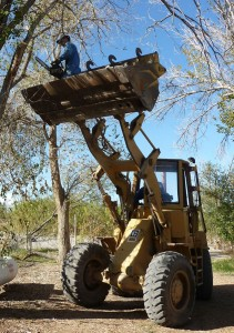 P1160532 treecut