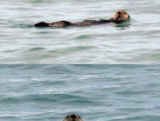 P1190255 Otter