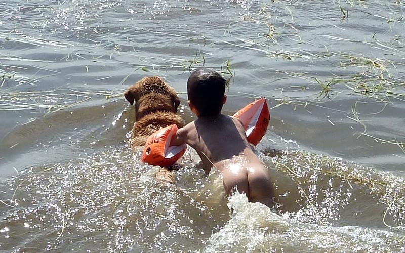 P1190428 Dog Tows Kid