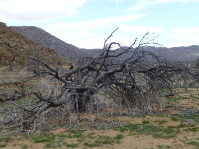 P1040984 tree (Medium)