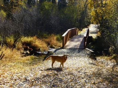 P1060449 Dog walk 2 (Large)