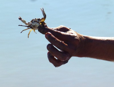 P1070816 tiny crab