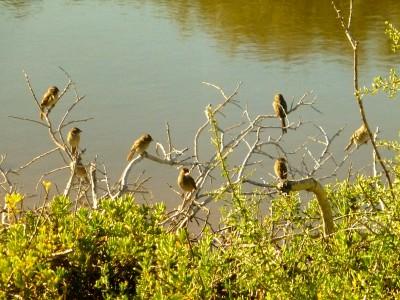 P1070744 bird council