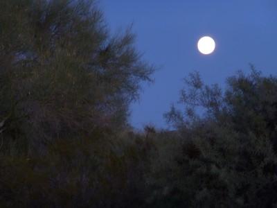P1100932 Super Moon