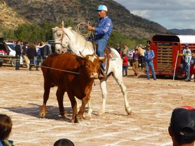 P1120015 Horse bite