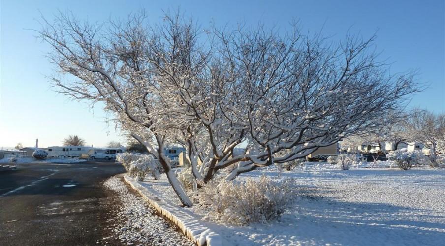 P1170342 Snow (Large)