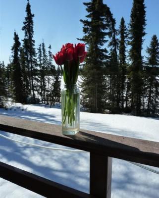 P1180643 Alaska Spring (Large)